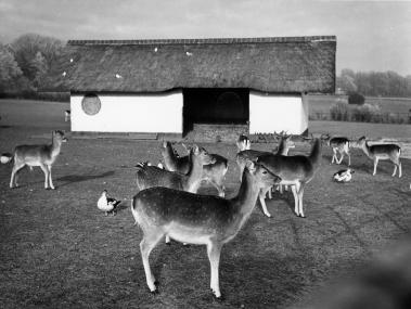Stal hertenkamp. Foto: archief www.gooienvechthistorisch.nl